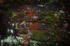 Alte Backsteinmauer bedeckt mit Moos und Anlagen Stockfoto