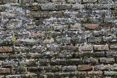 Alte Backsteinmauer der Beschaffenheit bedeckt mit Moos Lizenzfreies Stockfoto
