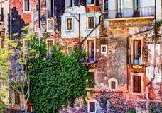 Alte Backsteinmauer der roten Weinlese mit Fenstern und grünem Efeu Stockfotos