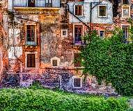 Alte Backsteinmauer der roten Weinlese mit Fenstern und grünem Efeu Lizenzfreie Stockbilder
