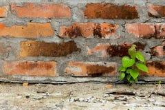 Alte Backsteinmauer der Weinlese Stockfotos