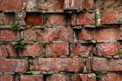 Alte Backsteinmauer des Schmutzhintergrundes, die verwittert wird und auseinander gefallen ist Die Zementzwischenlagen zwischen d Lizenzfreie Stockfotografie