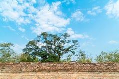 Alte Backsteinmauer im Tempel Stockbild