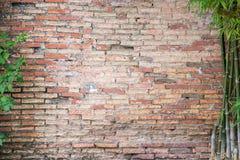 Alte Backsteinmauer mit Bambus Stockfoto