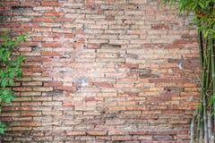 Alte Backsteinmauer mit Bambus Stockfotos