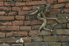 Alte Backsteinmauer mit Baum Stockbild