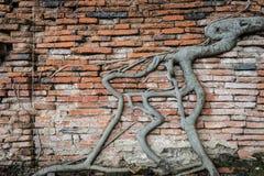 Alte Backsteinmauer mit Baumwurzeln Lizenzfreie Stockfotos