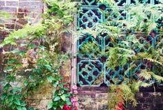 Alte Backsteinmauer mit Blume Stockfoto