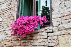 Alte Backsteinmauer mit Blumen im Fenster Stockbild