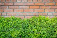 Alte Backsteinmauer mit Busch Lizenzfreie Stockfotos