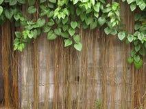 Alte Backsteinmauer mit dem Baum Lizenzfreie Stockfotos