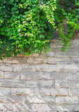 Alte Backsteinmauer mit Efeu Stockfotografie