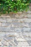 Alte Backsteinmauer mit Efeu Lizenzfreies Stockbild