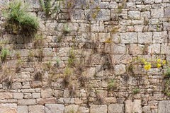 Alte Backsteinmauer mit Efeu Stockfoto