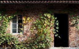 Alte Backsteinmauer mit einem Fenster und einem Rebstock um die Hausfassade Lizenzfreie Stockfotografie