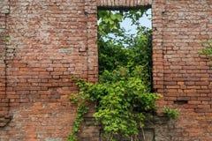 Alte Backsteinmauer mit einer alten Tür und Wachstum Lizenzfreie Stockfotos