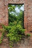 Alte Backsteinmauer mit einer alten Tür und Wachstum Stockfotografie
