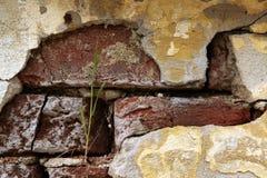 Alte Backsteinmauer mit gebrochenem Gips Stockfotografie