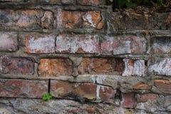 Alte Backsteinmauer mit Gips und Abziehbild Stockfotografie