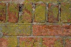 Alte Backsteinmauer mit Gips und Abziehbild Lizenzfreie Stockfotografie