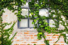 Alte Backsteinmauer mit Glasfenster Lizenzfreies Stockbild