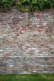 Alte Backsteinmauer mit grünem Efeu Stockfotografie