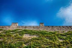 Alte Backsteinmauer mit grüner Kriechpflanzenanlage Stockbilder