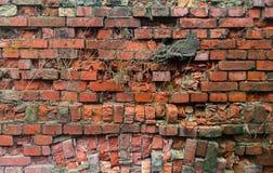 Alte Backsteinmauer mit Gras Lizenzfreie Stockbilder