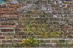 Alte Backsteinmauer mit Gras Stockfoto