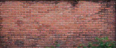 Alte Backsteinmauer mit kleinem Baumast Stockbild