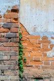 Alte Backsteinmauer mit lokalem Gemüse wachsen heran Lizenzfreie Stockfotos