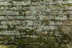 Alte Backsteinmauer mit Moos Stockbild