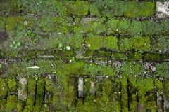 Alte Backsteinmauer mit Moos Lizenzfreies Stockfoto