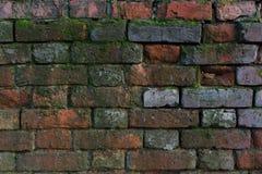 Alte Backsteinmauer mit Moos Stockfotos