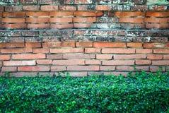 Alte Backsteinmauer mit Strauch Stockbilder