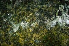 Alte Backsteinmauer mit wachsender Beschaffenheit des Mooses der alten Steinwandabdeckung Stockfoto