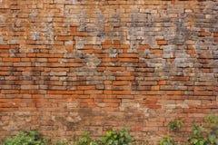 Alte Backsteinmauer soviel, dass die Bäume hat, die entlang einer Backsteinmauer wachsen Stockbild