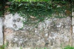 Alte Backsteinmauer und Anlagen Stockfotografie