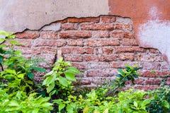 Alte Backsteinmauer und Anlagen Lizenzfreies Stockfoto