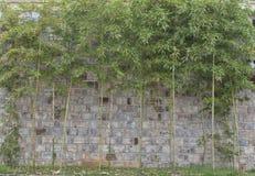 Alte Backsteinmauer und Bambus Stockfotos