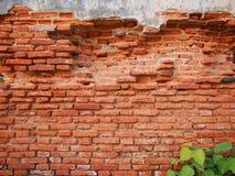 Alte Backsteinmauer und Baum Stockfotografie