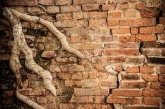 Alte Backsteinmauer- und Baumwurzeln Lizenzfreie Stockfotografie