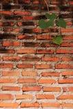 Alte Backsteinmauer und Blätter Stockfotografie