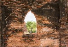 Alte Backsteinmauer und Fenster mit dem Baum- und Himmelhintergrund, der t schaut Lizenzfreies Stockbild