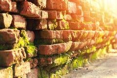 Alte Backsteinmauer und grüner MOS mit Sonne beleuchten Stockfoto