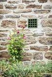 Alte Backsteinmauer- und Hibiscusblumen, vertikale Zusammensetzung Lizenzfreies Stockfoto