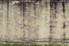 Alte Backsteinmauer und Unkräuter Lizenzfreie Stockfotos