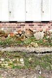 Alte Backsteinmauer und Unkräuter Stockfotos