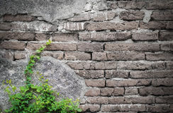 Alte Backsteinmauer und wenig Baum Lizenzfreies Stockfoto