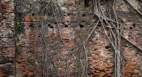 Alte Backsteinmauer und Wurzeln Lizenzfreie Stockfotos